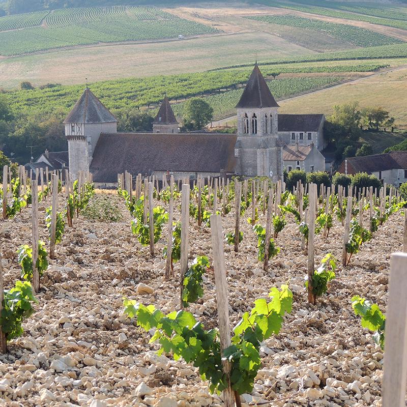 vue sur eglise de Chitry depuis les vignes du domaine