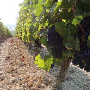 vignette produit Bourgogne Chitry rosé