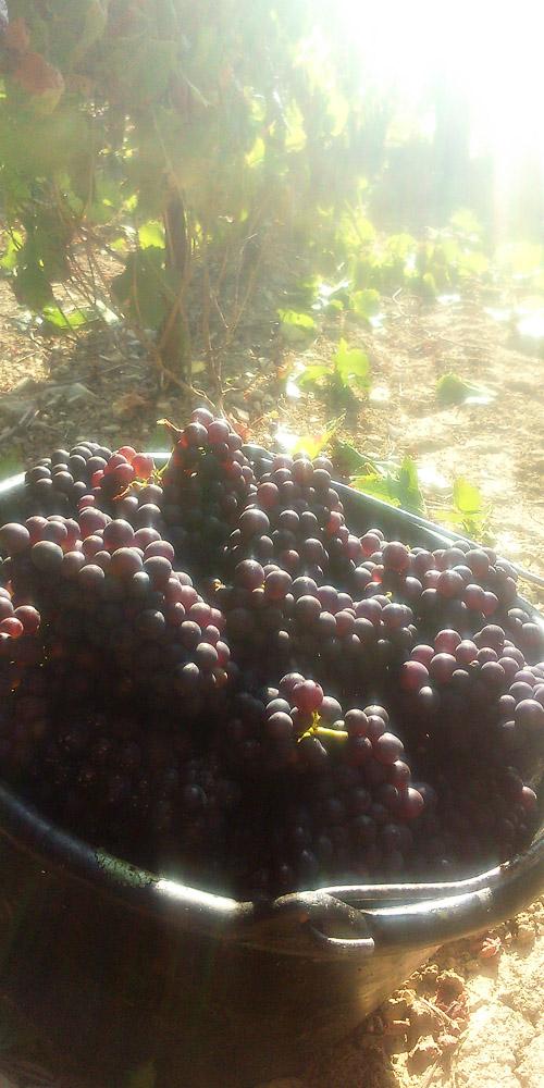saut de raisins