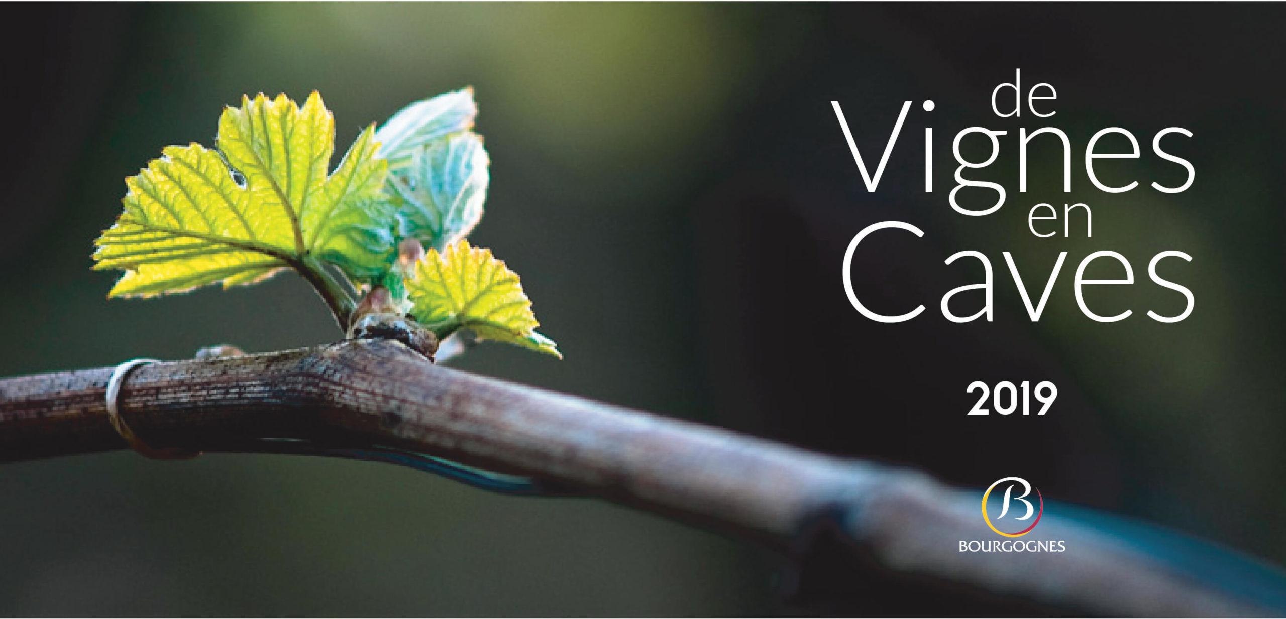 vignette de vignes en caves 2019